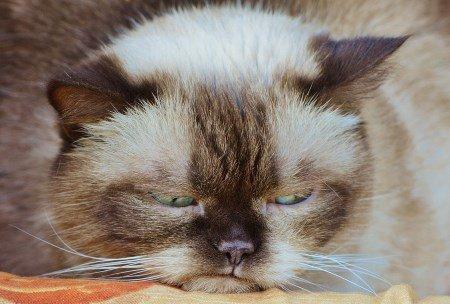 Grumpy Cat will auch keinen Sport treiben