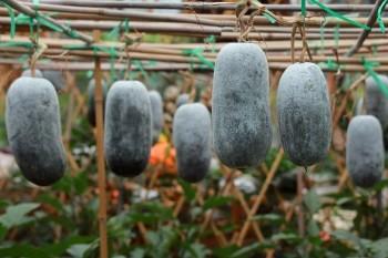 Wintermelone-abnehmen-low-carb-obst
